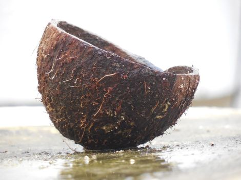 A_cut_coconut_shell